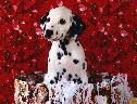 Cachorro e Flores wallpaper