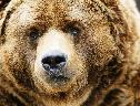 Urso wallpaper