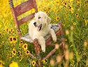 Lindo Cachorro e Flores wallpaper