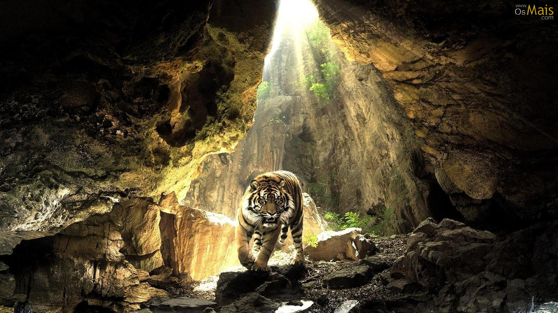 http://www.osmais.com/wallpapers/201210/tigre-na-caverna-wallpaper.jpg