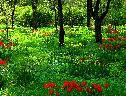Bosque das Tulipas wallpaper