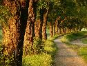 Caminho do Bosque wallpaper