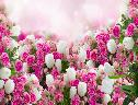 Flores Lindas wallpaper