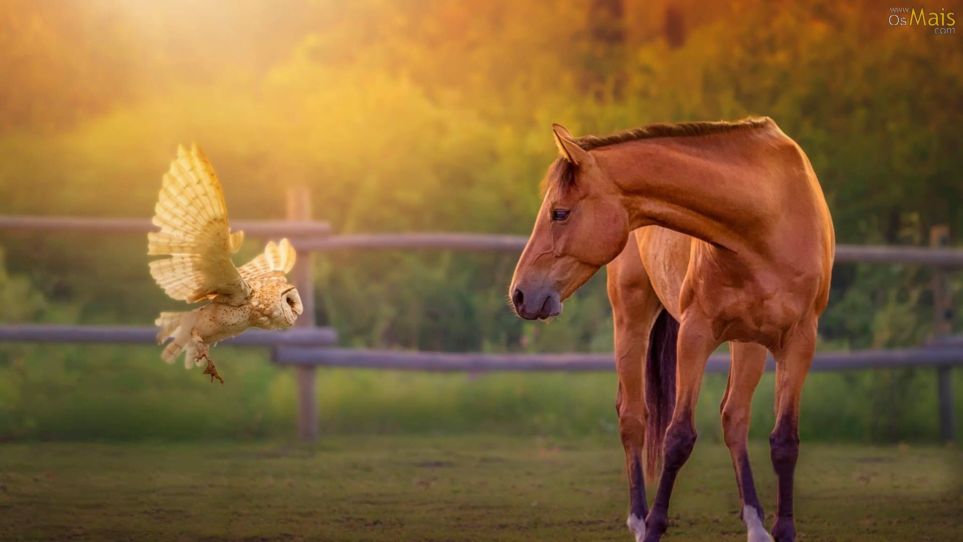 http://www.osmais.com/wallpapers/201604/animais-coruja-cavalo-wallpaper.jpg